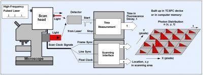 Principle of TCSPC FLIM