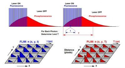 Principle of simultaneous FLIM / PLiM